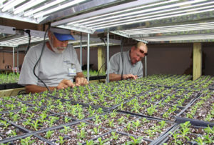 Self Regional grounds department growing plants for landscaping